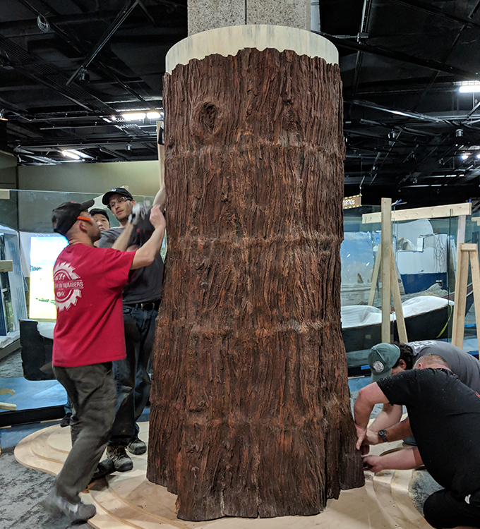 1220 Exhibits assembles the Western Red Cedar