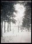 Snow scene looking down the path at Spooner's gate, January 1909, William L. Finley Photographs Collection, Org. Lot 369, b11, Finley A1212