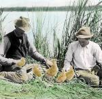 William L. Finley (r) and Herman Bohlman, Klamath Marsh, about 1905. Oreg. State Univ. Archives, Herman T. Bohlman Photo Collec., P202:Chicks