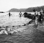 Seine fishing, lower Columbia River, about 1900. Univ. of Washington Lib., Special Coll. Div., IND0630