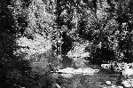 Upper Blue River, 1937 Courtesy Oregon State University Libraries
