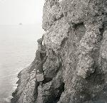 Herman T. Bohlman and William L. Finley climbing up a the face of Shag Rock to photograph murres in 1903 at Three Arch Rocks, OR. Org. Lot 369, Finley A2520.