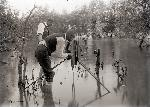Herman T. Bohlman and A. W. Anthony photographing kingfishers in 1902 near Portland, OR. Org. Lot 369, Finley A2723.
