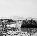 Oysters in Bay: Workers harvest clumps of oysters at low tide in Coos Bay. Photograph by Al Monner 1940. Photo courtesy Historic Photo Archive