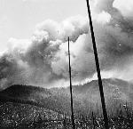 Tillamook Burn, 1933, bb004576