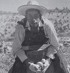 Photograph  Cellulose negative  b&w  4x5 inches  Mexican labor harvesting potatoes in central or southern Oregon    Oregon  United States  10/31/1943 OrHi 73286