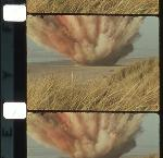 "Exploding whale, Florence, Oregon, November 12, 1970, 16mm original reversal with magnetic audio. OHS Research Library, KATU News, Moving Image Collection, ""Beached Whale Blow Up."""