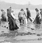Chinook Indians Seining, ca 1905, Sand Island, Baker Bay near Ilwaco, Washington, by John F. Ford. OrHi 46585