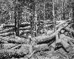 Loggers in Clatsop County, Oregon Historical Society Research Library, OrHi 93132, bb016662