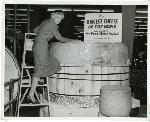 "Peter Mudie uses a ladder to climb up a giant wheel of Wisonsin cheese. Sign reads: ""The biggest cheese in teh world made expressly for the Fred Meyer Cheese Festival."" Coll 199 b33.f6"