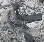 William L. Finley photographing heron nests in the treetops. San Francisco Bay, 1904. Org. Lot 369, Finley A532.