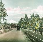 Car on road, Mt Hood in background. Columbia River Highway, Gifford and Prentiss.Hand colored lantern slide, Frank Branch Riley Collection, Box 10. bb015668.jpg